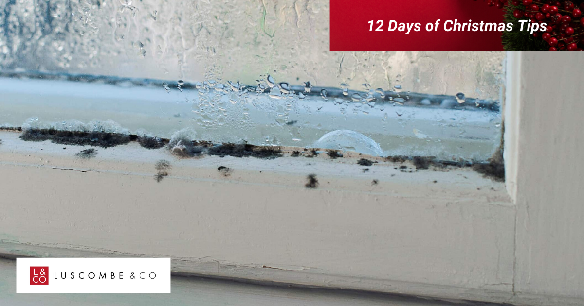 12 Tips of Christmas - Day 11 - Be Mindful Of Damp And Mould